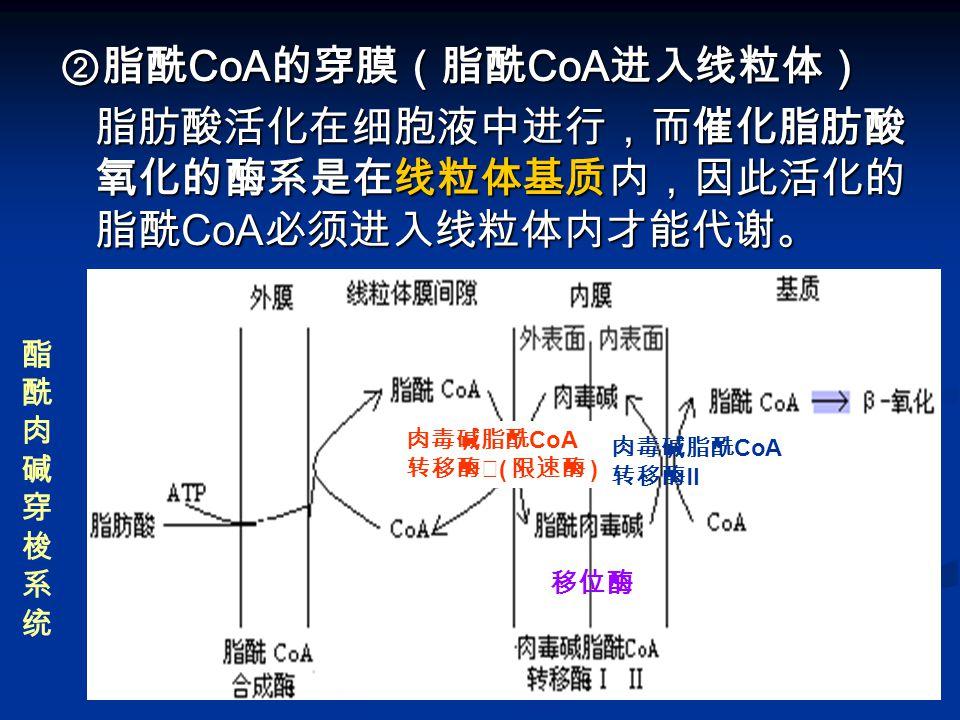 ②脂酰 CoA 的穿膜(脂酰 CoA 进入线粒体) 脂肪酸活化在细胞液中进行,而催化脂肪酸 氧化的酶系是在线粒体基质内,因此活化的 脂酰 CoA 必须进入线粒体内才能代谢。 脂肪酸活化在细胞液中进行,而催化脂肪酸 氧化的酶系是在线粒体基质内,因此活化的 脂酰 CoA 必须进入线粒体内才能代谢。 酯酰