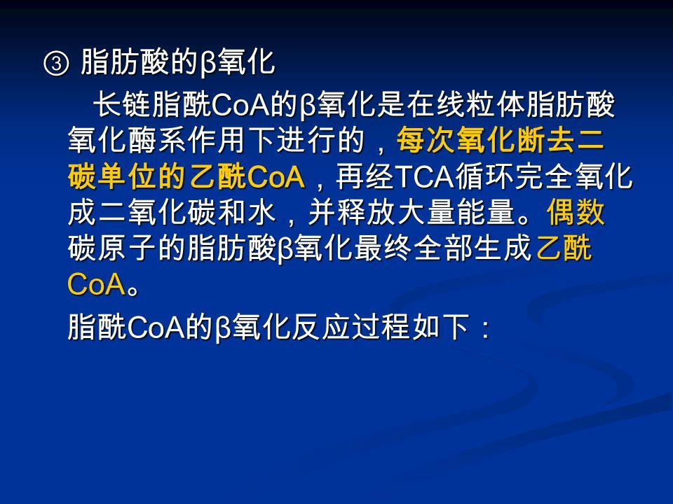 ③ 脂肪酸的 β 氧化 长链脂酰 CoA 的 β 氧化是在线粒体脂肪酸 氧化酶系作用下进行的,每次氧化断去二 碳单位的乙酰 CoA ,再经 TCA 循环完全氧化 成二氧化碳和水,并释放大量能量。偶数 碳原子的脂肪酸 β 氧化最终全部生成乙酰 CoA 。 长链脂酰 CoA 的 β 氧化是在线粒体脂肪酸