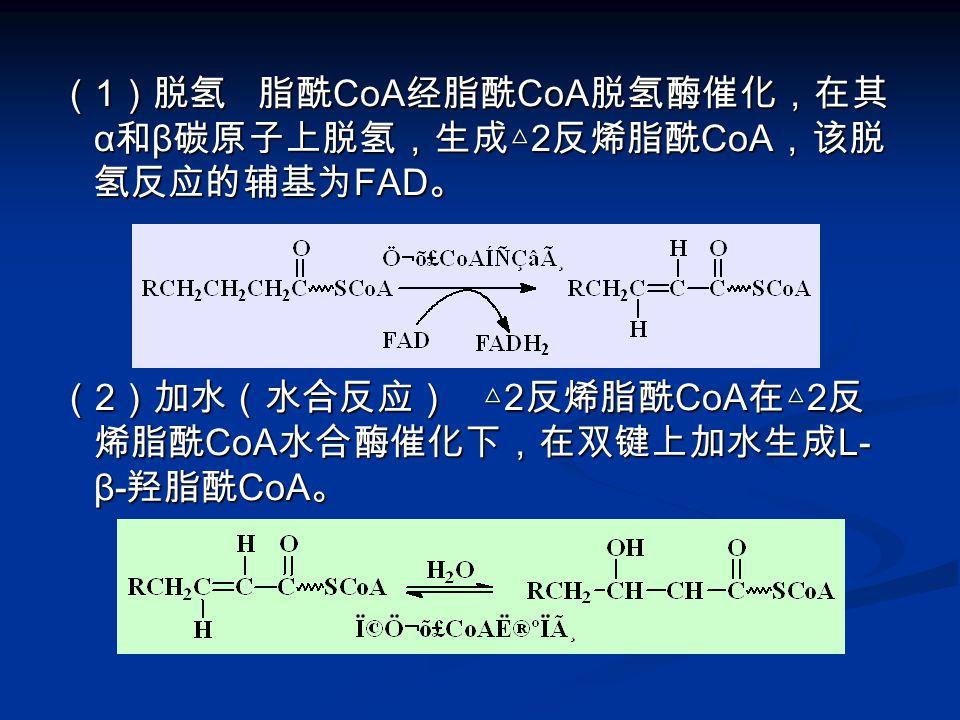 ( 1 )脱氢 脂酰 CoA 经脂酰 CoA 脱氢酶催化,在其 α 和 β 碳原子上脱氢,生成△ 2 反烯脂酰 CoA ,该脱 氢反应的辅基为 FAD 。 ( 2 )加水(水合反应) △ 2 反烯脂酰 CoA 在△ 2 反 烯脂酰 CoA 水合酶催化下,在双键上加水生成 L- β- 羟脂酰 CoA