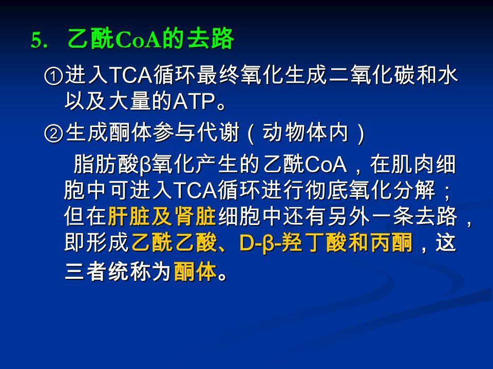 5. 乙酰 CoA 的去路 ①进入 TCA 循环最终氧化生成二氧化碳和水 以及大量的 ATP 。 ①进入 TCA 循环最终氧化生成二氧化碳和水 以及大量的 ATP 。 ②生成酮体参与代谢(动物体内) ②生成酮体参与代谢(动物体内) 脂肪酸 β 氧化产生的乙酰 CoA ,在肌肉细 胞中可进入 TCA