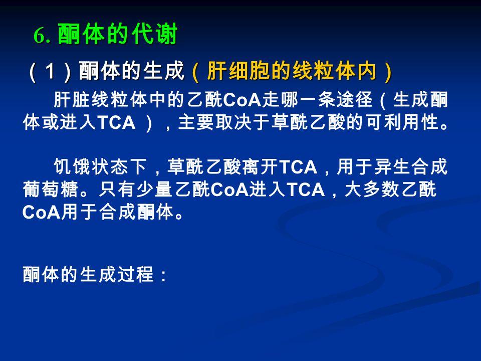 ( 1 )酮体的生成(肝细胞的线粒体内) 肝脏线粒体中的乙酰 CoA 走哪一条途径(生成酮 体或进入 TCA ),主要取决于草酰乙酸的可利用性。 饥饿状态下,草酰乙酸离开 TCA ,用于异生合成 葡萄糖。只有少量乙酰 CoA 进入 TCA ,大多数乙酰 CoA 用于合成酮体。 酮体的生成过程: 6.