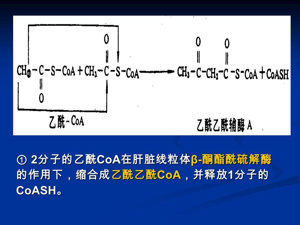 图 酮体的生成 -1 ① 2 分子的乙酰 CoA 在肝脏线粒体 β- 酮酯酰硫解酶 的作用下,缩合成乙酰乙酰 CoA ,并释放 1 分子的 CoASH 。