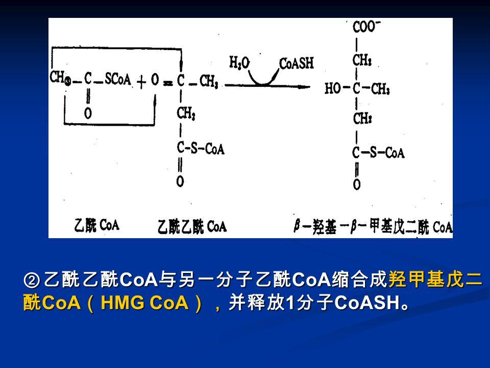 图 酮体的生成 -2 ②乙酰乙酰 CoA 与另一分子乙酰 CoA 缩合成羟甲基戊二 酰 CoA ( HMG CoA ),并释放 1 分子 CoASH 。