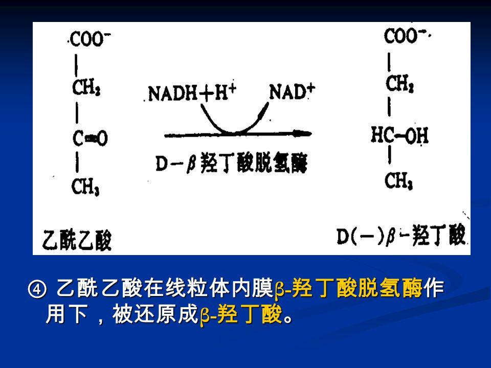 图 酮体的生成 -4 ④ 乙酰乙酸在线粒体内膜 β- 羟丁酸脱氢酶作 用下,被还原成 β- 羟丁酸。