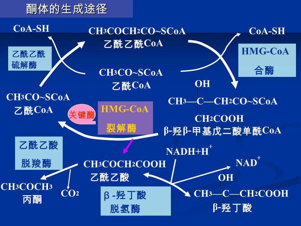 CH 3 COCH 2 CO~SCoA 乙酰乙酰 CoA CH 3 CO~SCoA 乙酰 CoA CH 3 —C—CH 2 CO~SCoA OH CH 2 COOH β- 羟 β- 甲基戊二酸单酰 CoA CH 3 —C—CH 2 COOH OH β- 羟丁酸 CH 3 COCH 2 COOH 乙酰