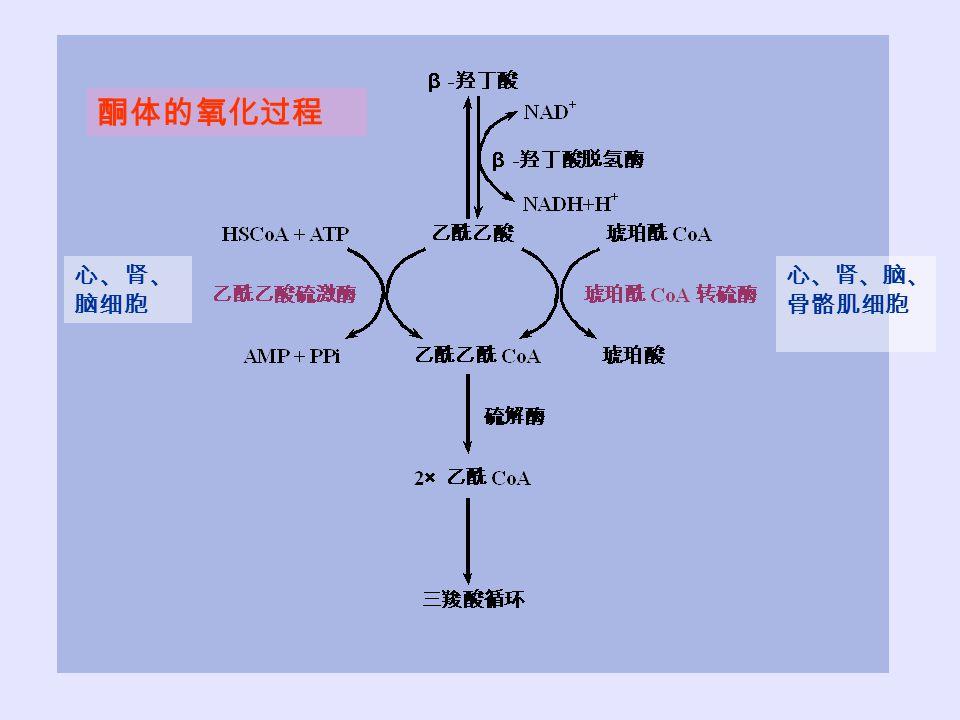 心、肾、脑、 骨骼肌细胞 心、肾、 脑细胞 酮体的氧化过程