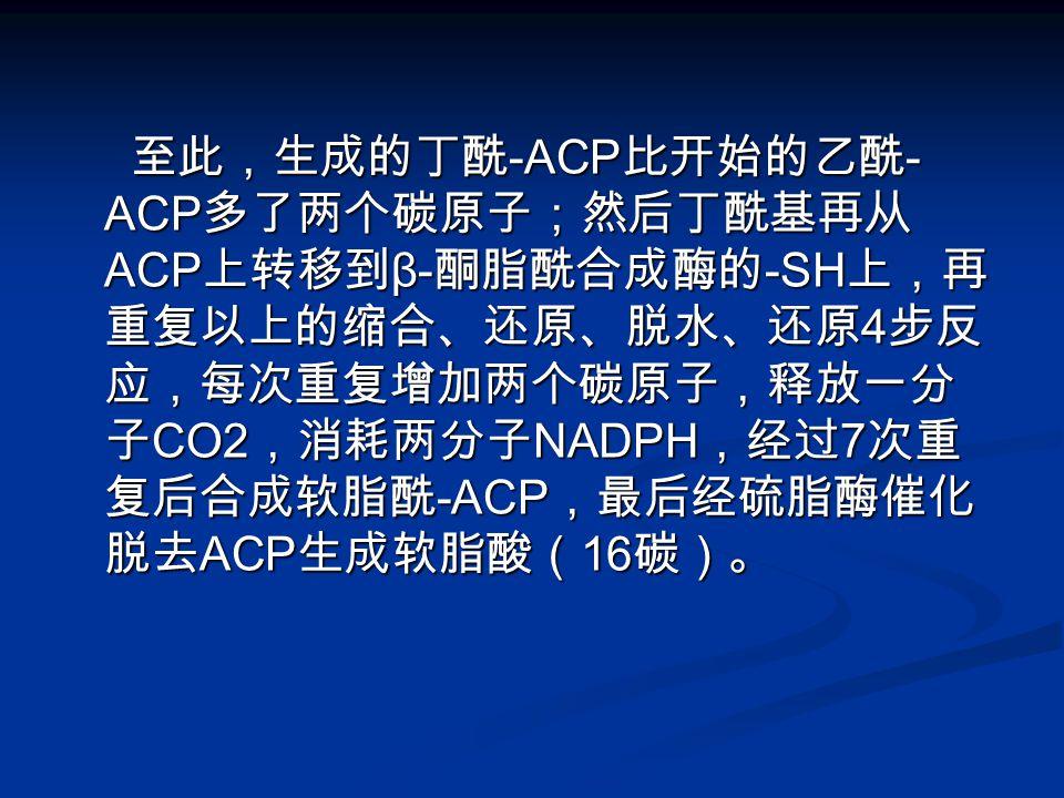 至此,生成的丁酰 -ACP 比开始的乙酰 - ACP 多了两个碳原子;然后丁酰基再从 ACP 上转移到 β- 酮脂酰合成酶的 -SH 上,再 重复以上的缩合、还原、脱水、还原 4 步反 应,每次重复增加两个碳原子,释放一分 子 CO2 ,消耗两分子 NADPH ,经过 7 次重 复后合成软脂酰 -A