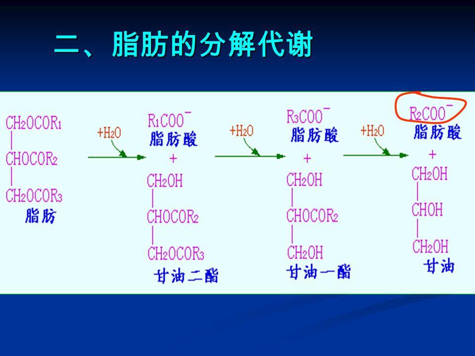 ( 2 )合成阶段 ——— 以软脂酸( 16 碳)的合成为 例(在细胞液中进行)。催化该合成反应的是一 个多酶体系,共有七种蛋白质参与反应,以没有 酶活性的脂酰基载体蛋白( ACP )为中心,组成 一簇。 原初反应(初始反应) 原初反应(初始反应) 原初反应 原初反应 缩合反应 缩合反应 还原反应 还原反应 脱水反应 脱水反应 还原反应 还原反应