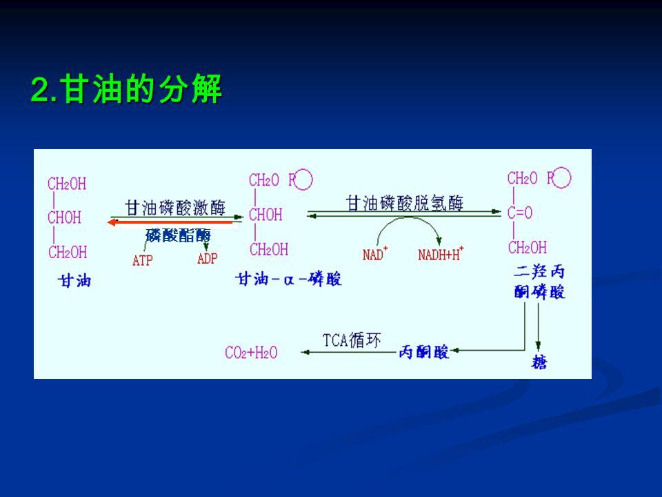 4 )不饱和脂肪酸的分解 ① 单不饱和脂肪酸的氧化 ① 单不饱和脂肪酸的氧化 油酸的 β 氧化 : 油酸的 β 氧化 : △ 3 顺 — △ 2 反烯脂酰 CoA 异构酶(改变双键位置和顺反构型) △ 3 顺 — △ 2 反烯脂酰 CoA 异构酶(改变双键位置和顺反构型) ② 多不饱和脂肪酸的氧化 ② 多不饱和脂肪酸的氧化 亚油酸的 β 氧化 : 亚油酸的 β 氧化 : △ 3 顺 — △ 2 反烯脂酰 CoA 异构酶(改变双键位置和顺反构 型) β- 羟脂酰 CoA 差向酶(改变 β- 羟基构型: D→L 型) △ 3 顺 — △ 2 反烯脂酰 CoA 异构酶(改变双键位置和顺反构 型) β- 羟脂酰 CoA 差向酶(改变 β- 羟基构型: D→L 型)