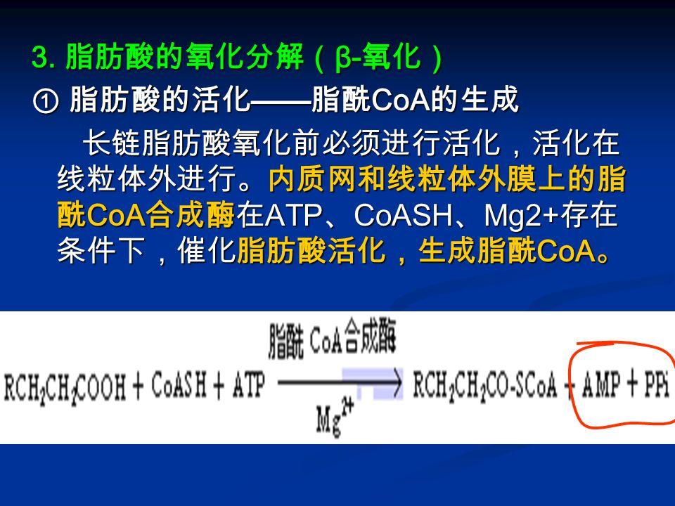 3. 脂肪酸的氧化分解( β- 氧化) ① 脂肪酸的活化 —— 脂酰 CoA 的生成 长链脂肪酸氧化前必须进行活化,活化在 线粒体外进行。内质网和线粒体外膜上的脂 酰 CoA 合成酶在 ATP 、 CoASH 、 Mg2+ 存在 条件下,催化脂肪酸活化,生成脂酰 CoA 。 长链脂肪酸氧化前必须进行