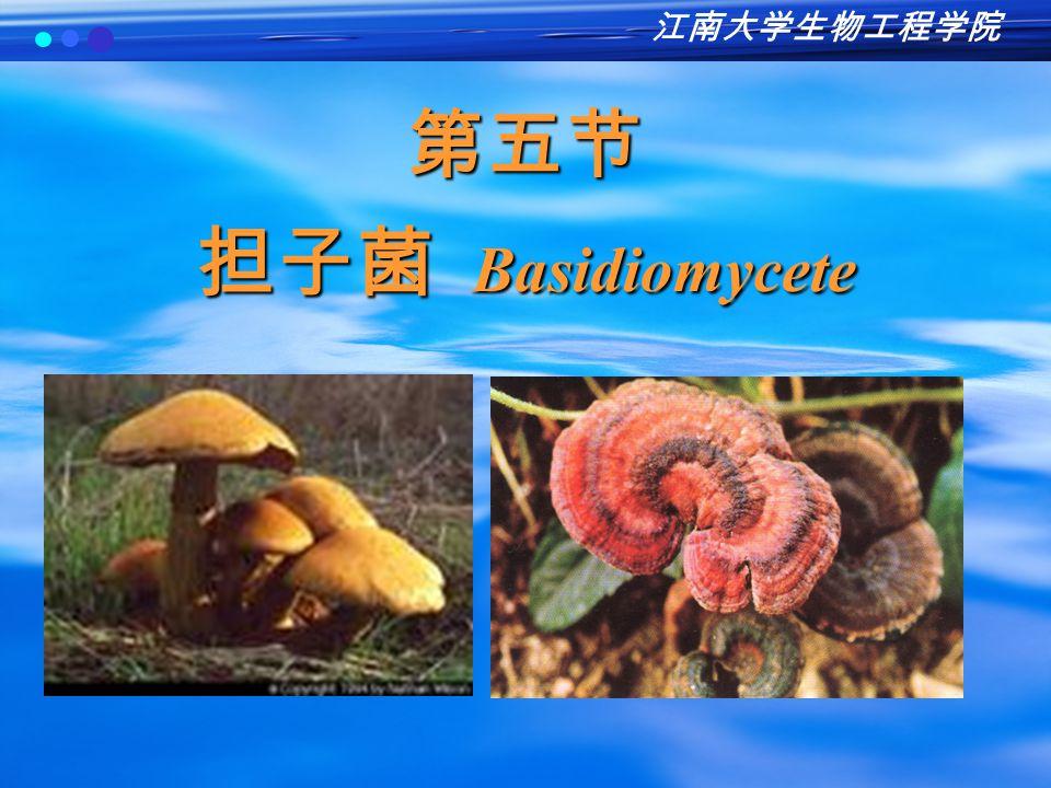 担子菌 Basidiomycete 担子菌纲的真菌称为担子菌。 包括植物致病菌、人致病菌(新型隐球 酵母 Cryptococcus neoformans )、食用菌 (蘑菇、木耳等)。 许多能形成肉眼可见的子实体。
