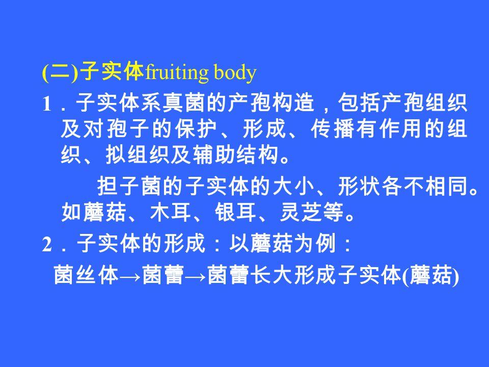 ( 二 ) 子实体 fruiting body 1 .子实体系真菌的产孢构造,包括产孢组织 及对孢子的保护、形成、传播有作用的组 织、拟组织及辅助结构。 担子菌的子实体的大小、形状各不相同。 如蘑菇、木耳、银耳、灵芝等。 2 .子实体的形成:以蘑菇为例: 菌丝体 → 菌蕾 → 菌蕾长大形成子实体 ( 蘑菇 )