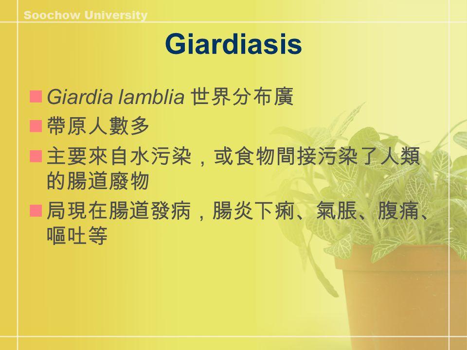 Giardiasis Giardia lamblia 世界分布廣 帶原人數多 主要來自水污染,或食物間接污染了人類 的腸道廢物 局現在腸道發病,腸炎下痢、氣脹、腹痛、 嘔吐等