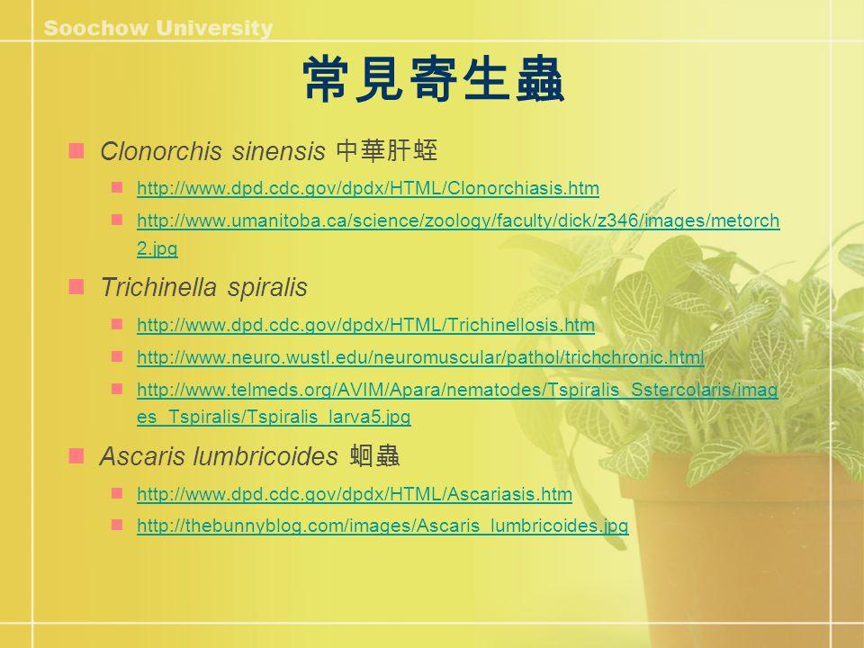 常見寄生蟲 Clonorchis sinensis 中華肝蛭 http://www.dpd.cdc.gov/dpdx/HTML/Clonorchiasis.htm http://www.umanitoba.ca/science/zoology/faculty/dick/z346/images/metorch 2.jpg http://www.umanitoba.ca/science/zoology/faculty/dick/z346/images/metorch 2.jpg Trichinella spiralis http://www.dpd.cdc.gov/dpdx/HTML/Trichinellosis.htm http://www.neuro.wustl.edu/neuromuscular/pathol/trichchronic.html http://www.telmeds.org/AVIM/Apara/nematodes/Tspiralis_Sstercolaris/imag es_Tspiralis/Tspiralis_larva5.jpg http://www.telmeds.org/AVIM/Apara/nematodes/Tspiralis_Sstercolaris/imag es_Tspiralis/Tspiralis_larva5.jpg Ascaris lumbricoides 蛔蟲 http://www.dpd.cdc.gov/dpdx/HTML/Ascariasis.htm http://thebunnyblog.com/images/Ascaris_lumbricoides.jpg