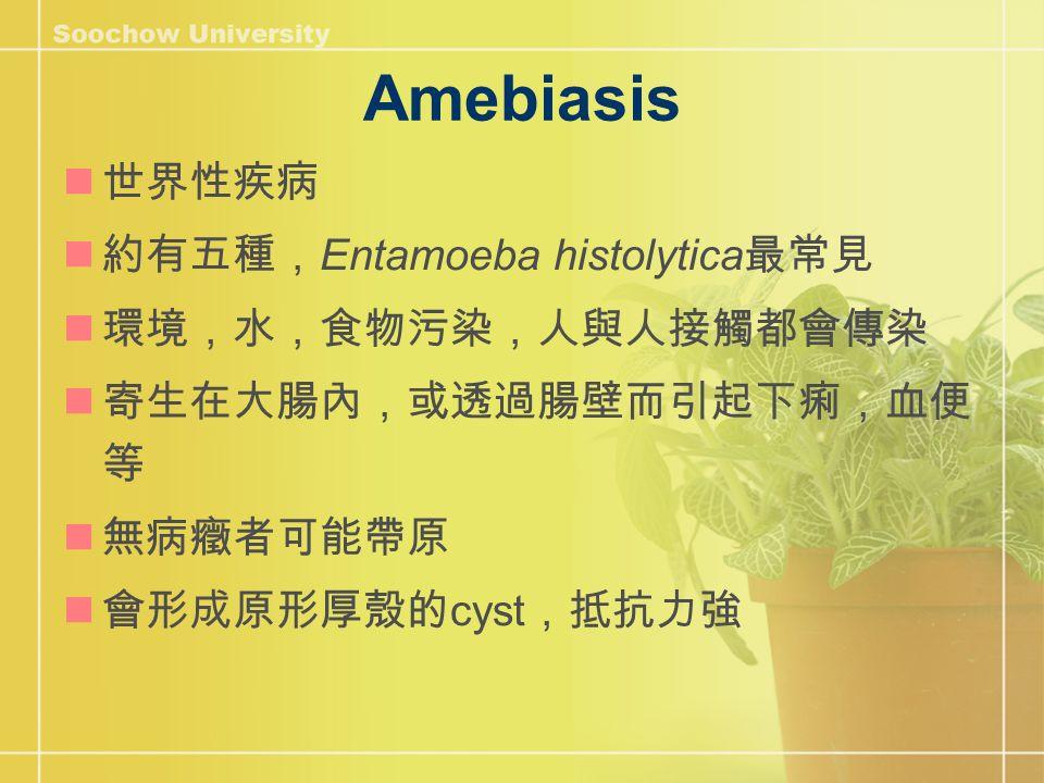 Amebiasis 世界性疾病 約有五種, Entamoeba histolytica 最常見 環境,水,食物污染,人與人接觸都會傳染 寄生在大腸內,或透過腸壁而引起下痢,血便 等 無病癥者可能帶原 會形成原形厚殼的 cyst ,抵抗力強