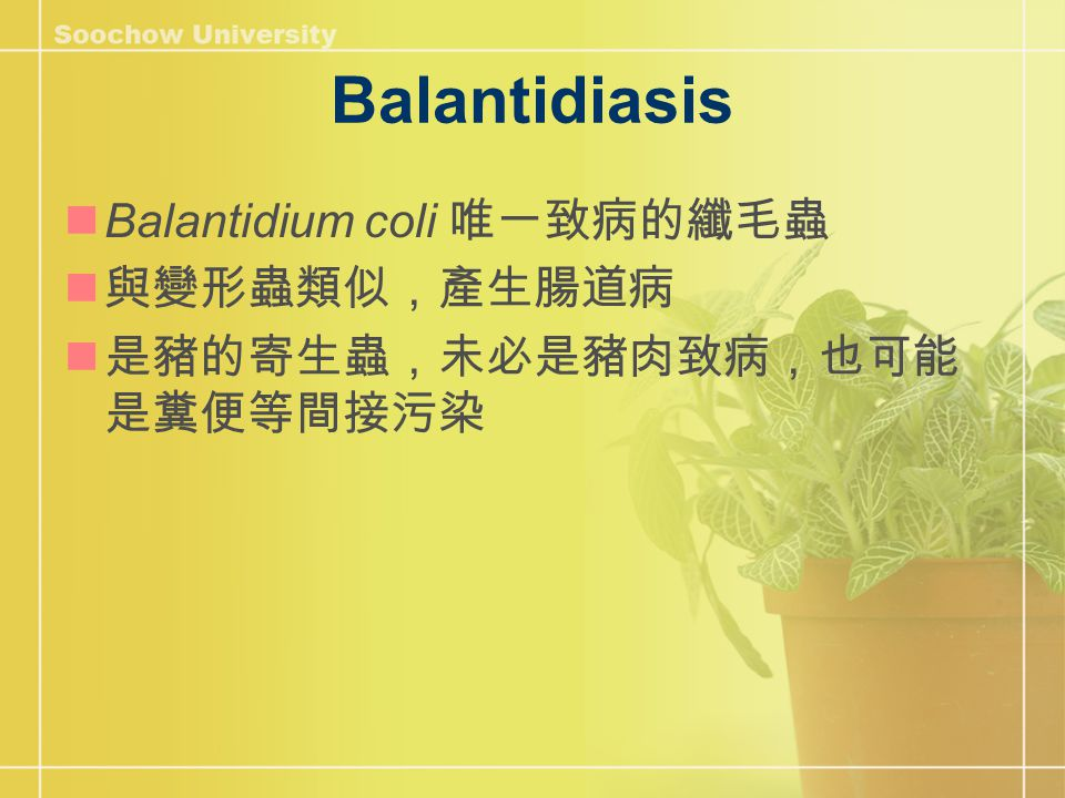 Balantidiasis Balantidium coli 唯一致病的纖毛蟲 與變形蟲類似,產生腸道病 是豬的寄生蟲,未必是豬肉致病,也可能 是糞便等間接污染