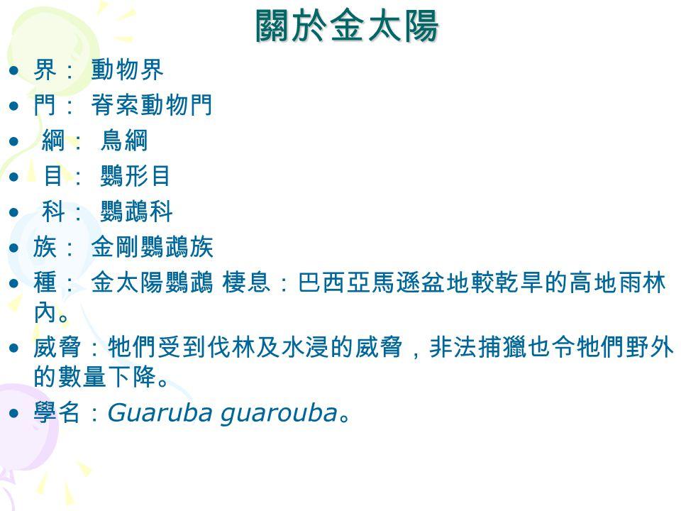 關於金太陽 關於金太陽 界: 動物界 門: 脊索動物門 綱: 鳥綱 目: 鸚形目 科: 鸚鵡科 族: 金剛鸚鵡族 種: 金太陽鸚鵡 棲息:巴西亞馬遜盆地較乾旱的高地雨林 內。 威脅:牠們受到伐林及水浸的威脅,非法捕獵也令牠們野外 的數量下降。 學名: Guaruba guarouba 。