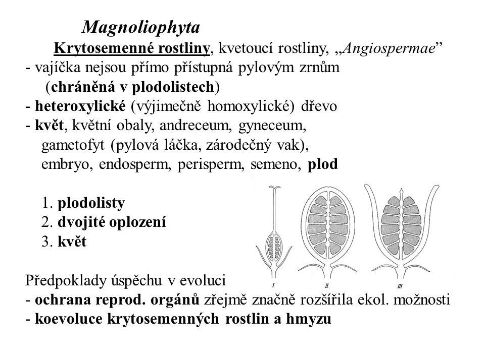 Svrchní, polospodní, spodní semeník; češule (hypanthium)