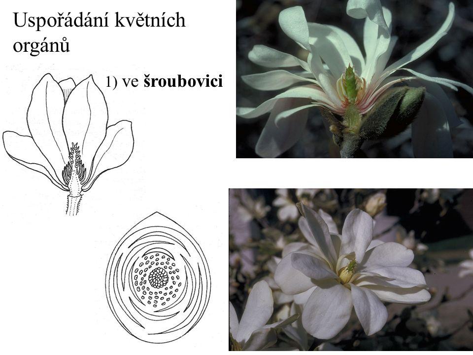 1.Magnolia x soulangeana P  A  G  2. Ranunculus acris K 5 C 5 A  G  3.