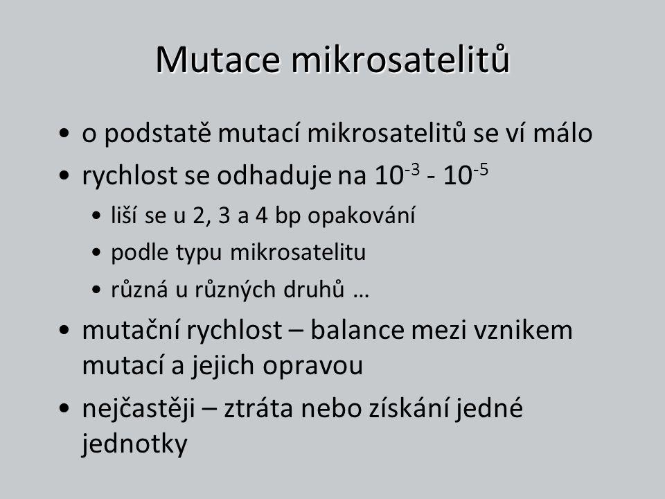 Mutace mikrosatelitů o podstatě mutací mikrosatelitů se ví málo rychlost se odhaduje na 10 -3 - 10 -5 liší se u 2, 3 a 4 bp opakování podle typu mikro