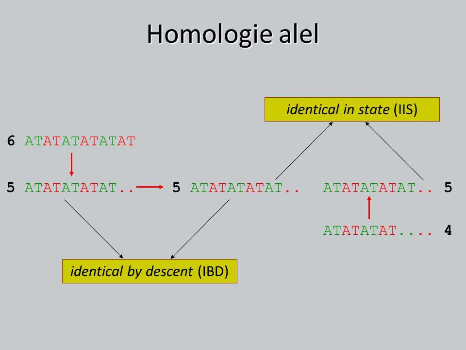 Homologie alel ATATATATAT.. 55 ATATATATAT.. ATATATAT.... 4 6 ATATATATATAT 5 ATATATATAT.. identical by descent (IBD) identical in state (IIS)