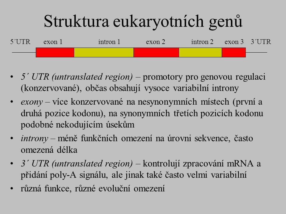Struktura eukaryotních genů 5´ UTR (untranslated region) – promotory pro genovou regulaci (konzervované), občas obsahují vysoce variabilní introny exo