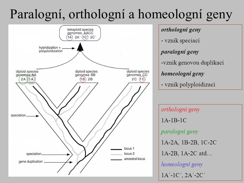 Paralogní, orthologní a homeologní geny orthologní geny 1A-1B-1C paralogní geny 1A-2A, 1B-2B, 1C-2C 1A-2B, 1A-2C atd… homeologní geny 1A´-1C´, 2A´-2C´