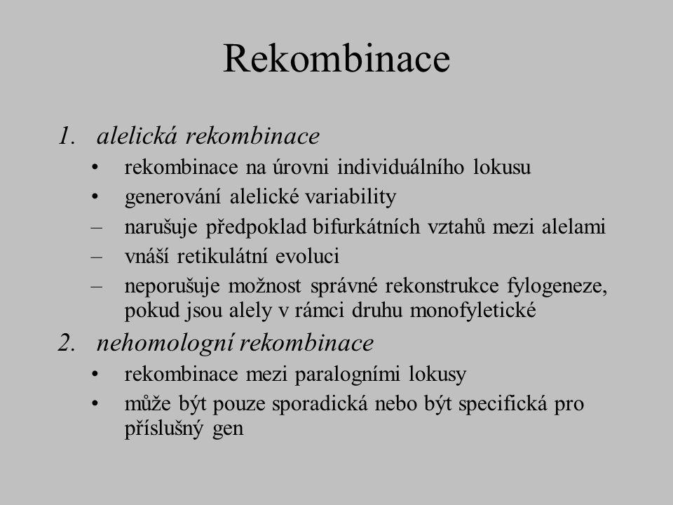 Rekombinace 1.alelická rekombinace rekombinace na úrovni individuálního lokusu generování alelické variability –narušuje předpoklad bifurkátních vztah