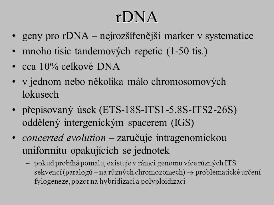 rDNA geny pro rDNA – nejrozšířenější marker v systematice mnoho tisíc tandemových repetic (1-50 tis.) cca 10% celkové DNA v jednom nebo několika málo