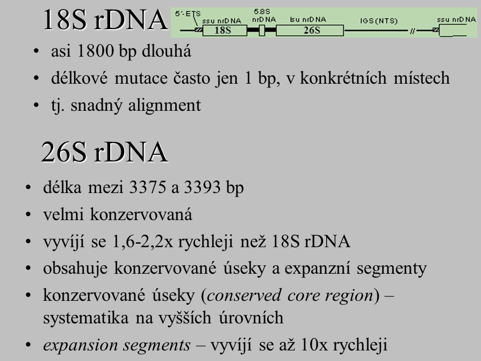 26S rDNA délka mezi 3375 a 3393 bp velmi konzervovaná vyvíjí se 1,6-2,2x rychleji než 18S rDNA obsahuje konzervované úseky a expanzní segmenty konzerv