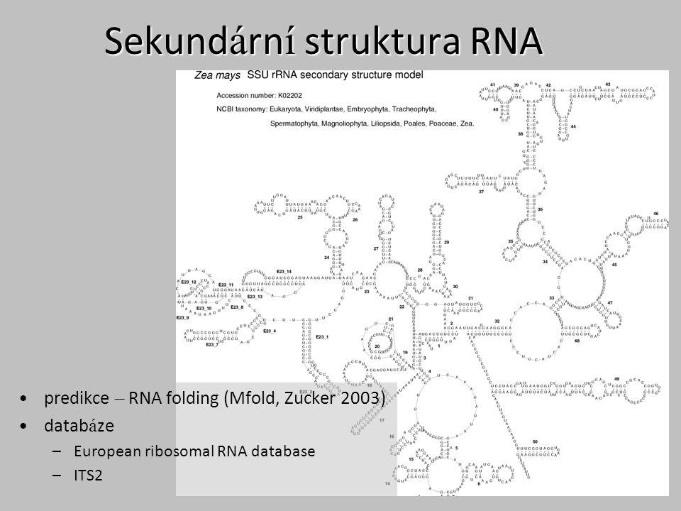 Sekund á rn í struktura RNA predikce – RNA folding (Mfold, Zucker 2003) datab á ze –European ribosomal RNA database –ITS2