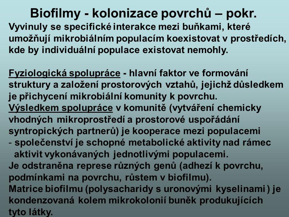 Biofilmy - kolonizace povrchů – pokr. Vyvinuly se specifické interakce mezi buňkami, které umožňují mikrobiálním populacím koexistovat v prostředích,