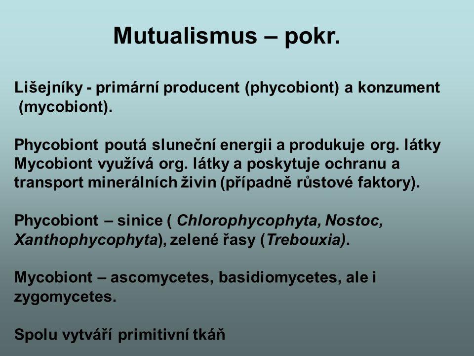 Mutualismus – pokr. Lišejníky - primární producent (phycobiont) a konzument (mycobiont). Phycobiont poutá sluneční energii a produkuje org. látky Myco