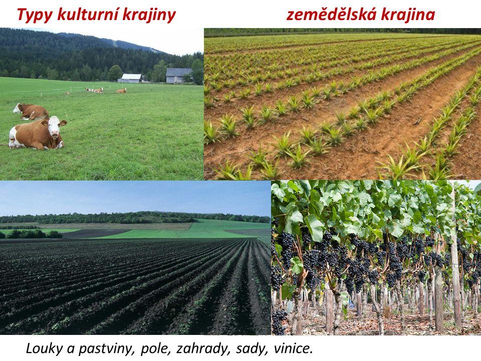 zemědělská krajina Louky a pastviny, pole, zahrady, sady, vinice. Typy kulturní krajiny