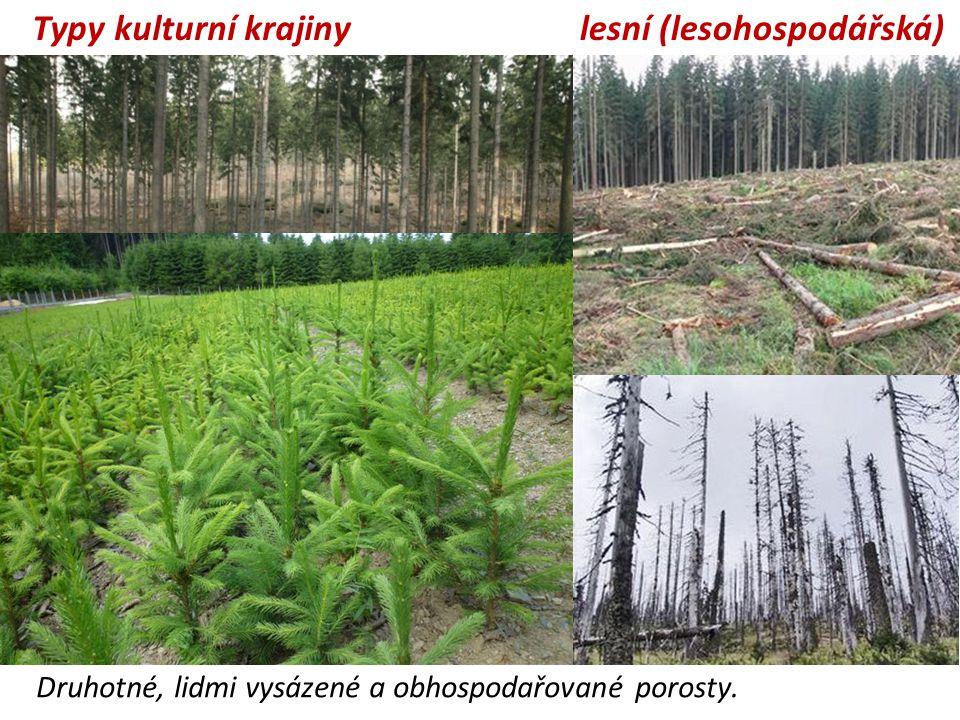 lesní (lesohospodářská) Druhotné, lidmi vysázené a obhospodařované porosty. Typy kulturní krajiny