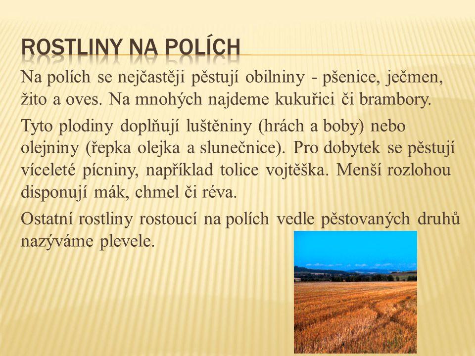 Na polích se nejčastěji pěstují obilniny - pšenice, ječmen, žito a oves. Na mnohých najdeme kukuřici či brambory. Tyto plodiny doplňují luštěniny (hrá