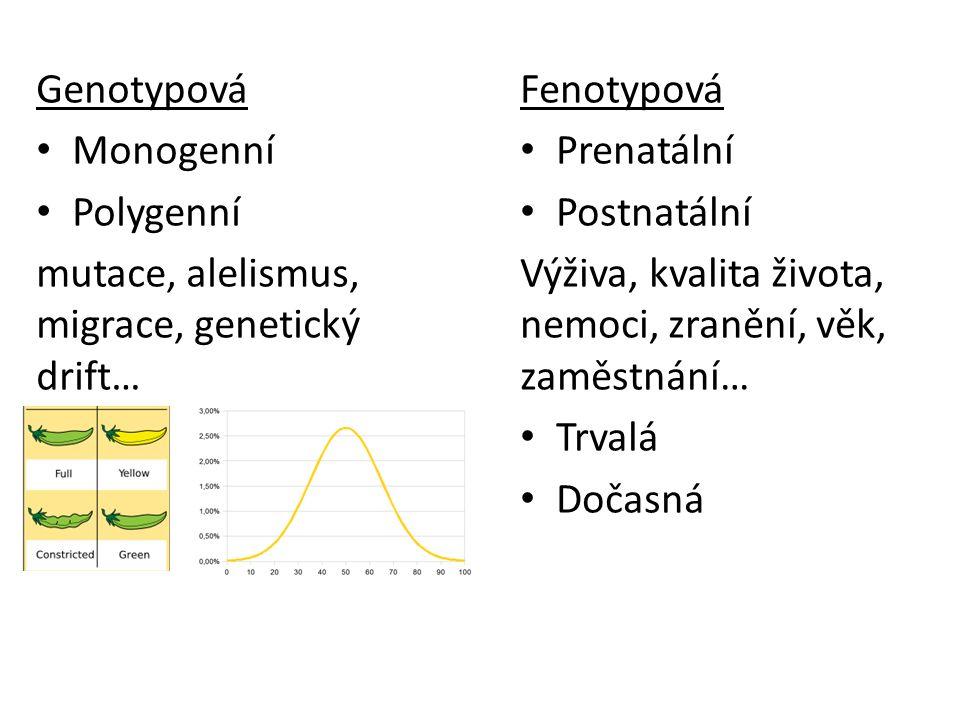 Genotypová Monogenní Polygenní mutace, alelismus, migrace, genetický drift… Fenotypová Prenatální Postnatální Výživa, kvalita života, nemoci, zranění,