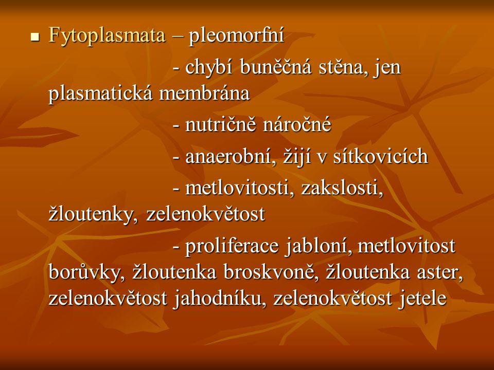 Fytoplasmata – pleomorfní Fytoplasmata – pleomorfní - chybí buněčná stěna, jen plasmatická membrána - chybí buněčná stěna, jen plasmatická membrána -
