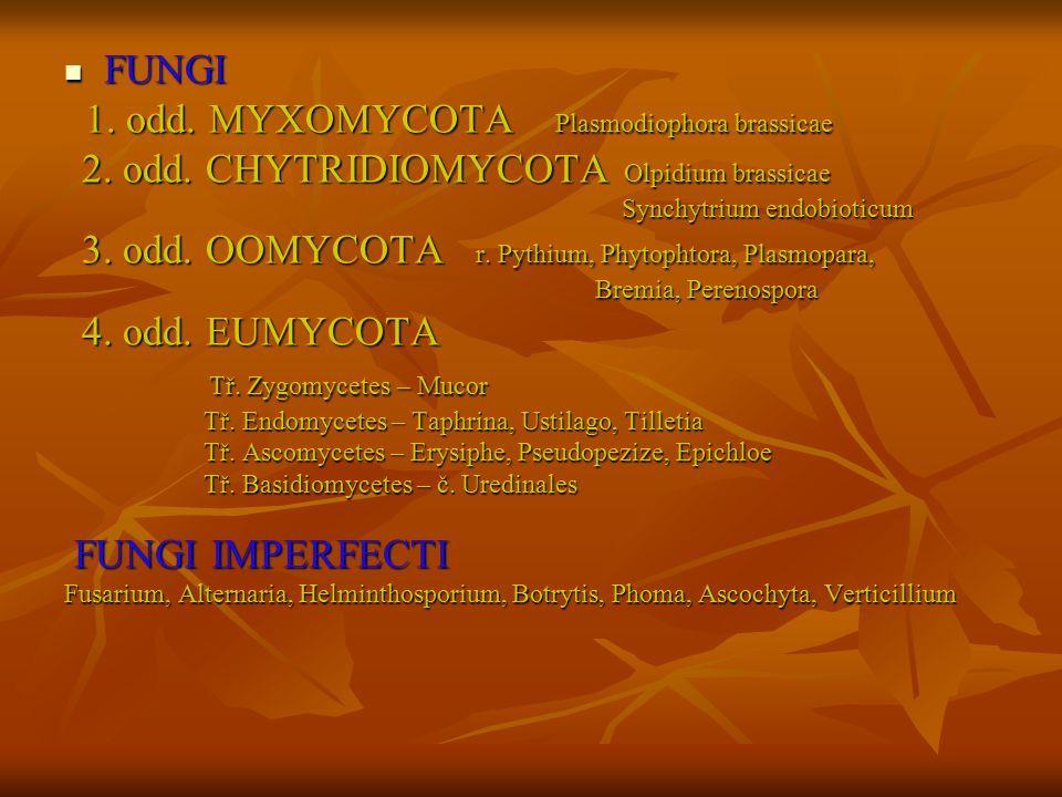 FUNGI FUNGI 1. odd. MYXOMYCOTA Plasmodiophora brassicae 1. odd. MYXOMYCOTA Plasmodiophora brassicae 2. odd. CHYTRIDIOMYCOTA Olpidium brassicae 2. odd.