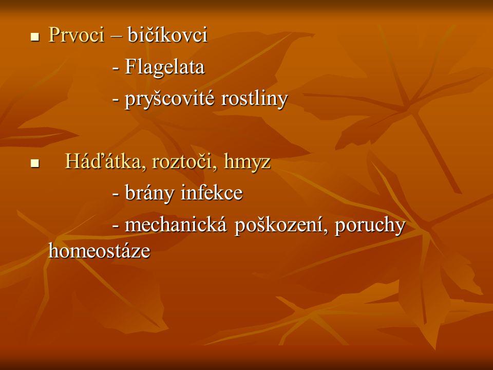 Prvoci – bičíkovci Prvoci – bičíkovci - Flagelata - Flagelata - pryšcovité rostliny - pryšcovité rostliny Háďátka, roztoči, hmyz Háďátka, roztoči, hmy