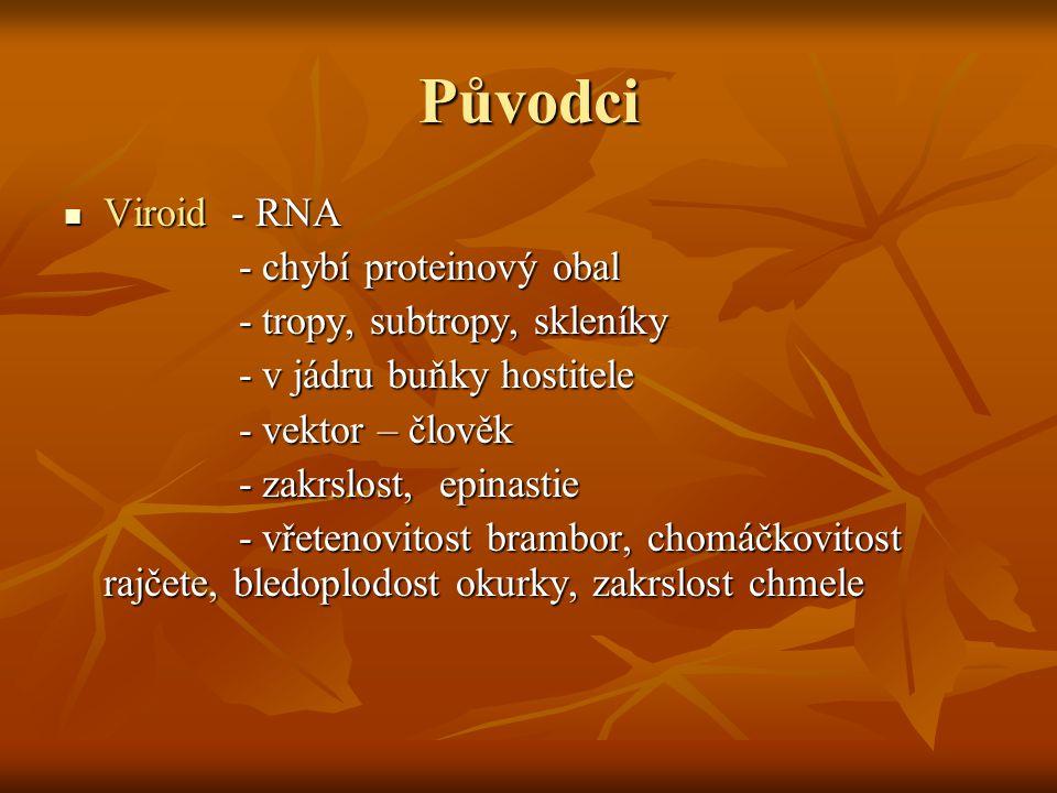 Původci Viroid - RNA Viroid - RNA - chybí proteinový obal - chybí proteinový obal - tropy, subtropy, skleníky - tropy, subtropy, skleníky - v jádru bu