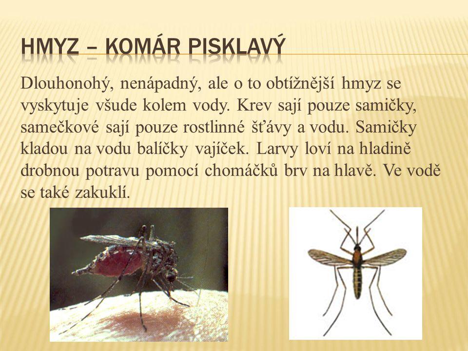 Dlouhonohý, nenápadný, ale o to obtížnější hmyz se vyskytuje všude kolem vody. Krev sají pouze samičky, samečkové sají pouze rostlinné šťávy a vodu. S