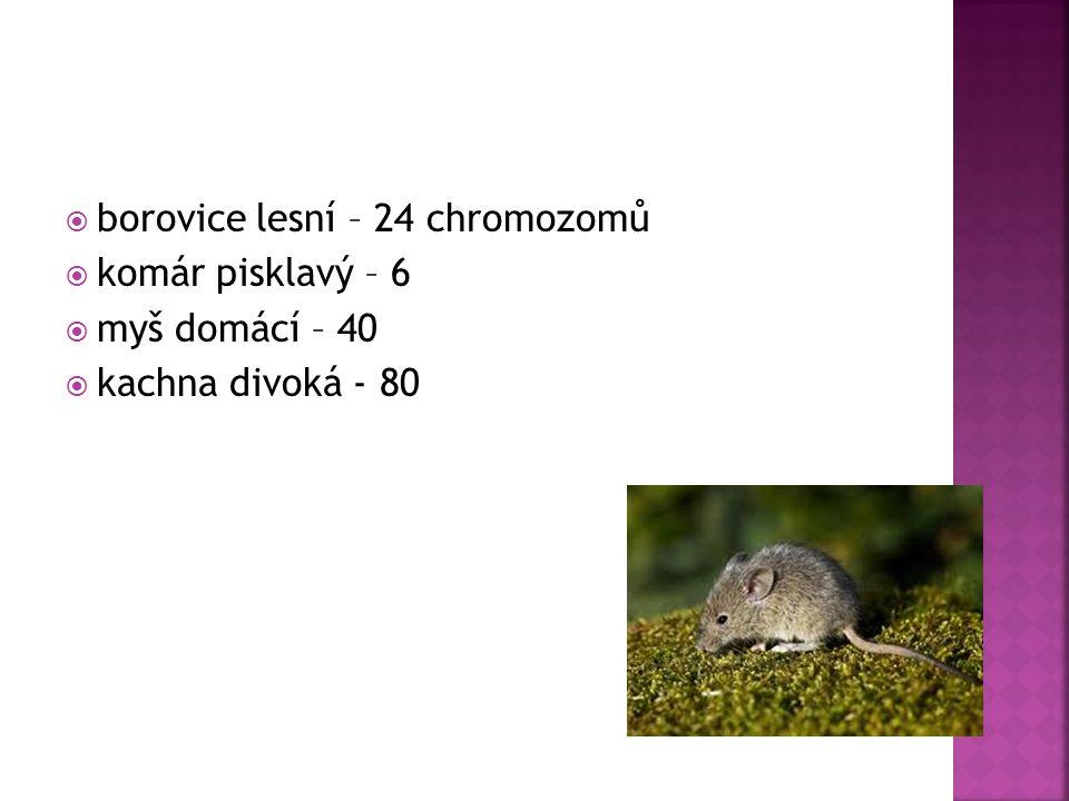  borovice lesní – 24 chromozomů  komár pisklavý – 6  myš domácí – 40  kachna divoká - 80
