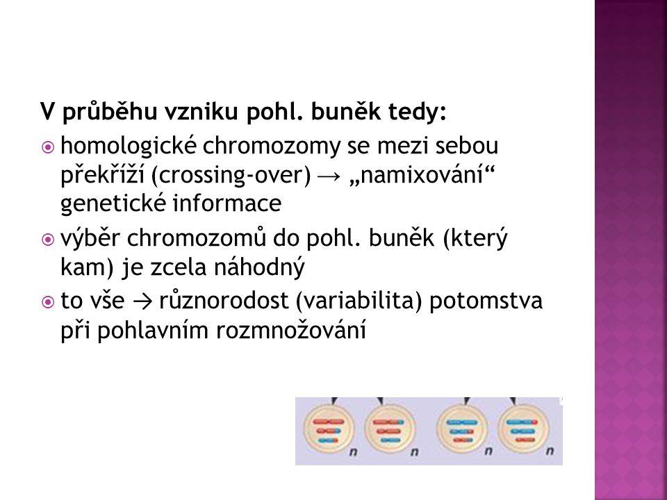 """V průběhu vzniku pohl. buněk tedy:  homologické chromozomy se mezi sebou překříží (crossing-over) → """"namixování"""" genetické informace  výběr chromozo"""