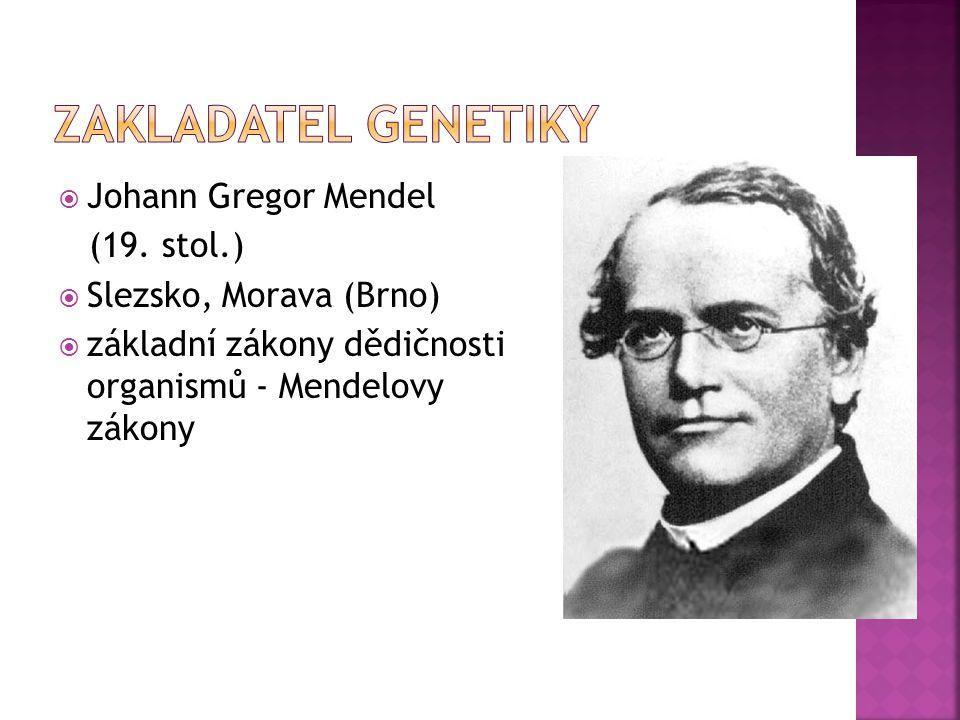  Johann Gregor Mendel (19. stol.)  Slezsko, Morava (Brno)  základní zákony dědičnosti organismů - Mendelovy zákony