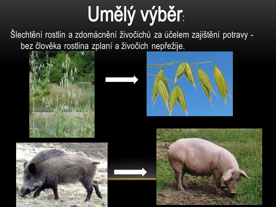 Šlechtění rostlin a zdomácnění živočichů za účelem zajištění potravy - bez člověka rostlina zplaní a živočich nepřežije.