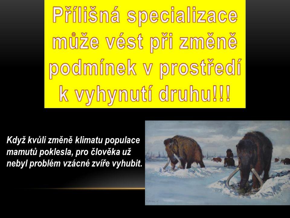 Když kvůli změně klimatu populace mamutů poklesla, pro člověka už nebyl problém vzácné zvíře vyhubit.