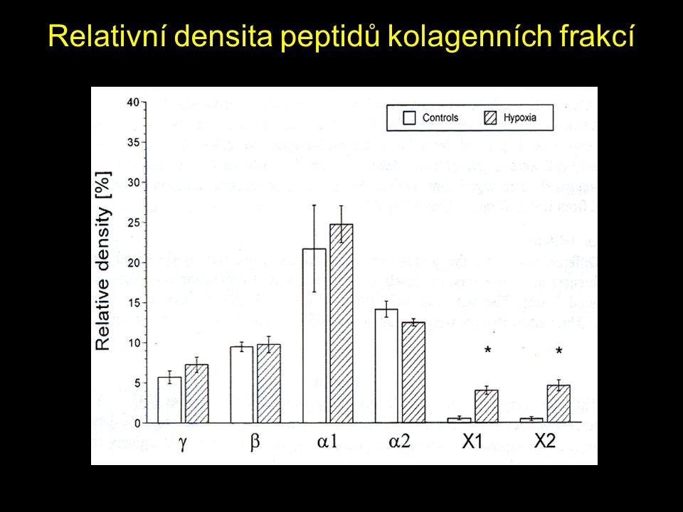 Relativní densita peptidů kolagenních frakcí