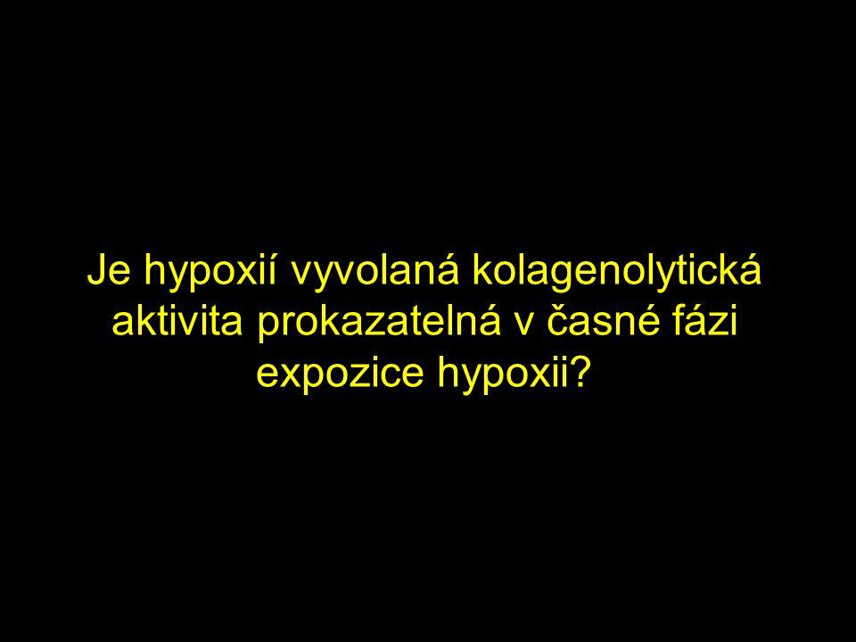 Je hypoxií vyvolaná kolagenolytická aktivita prokazatelná v časné fázi expozice hypoxii?