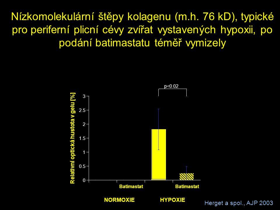 Nízkomolekulární štěpy kolagenu (m.h. 76 kD), typické pro periferní plicní cévy zvířat vystavených hypoxii, po podání batimastatu téměř vymizely Batim